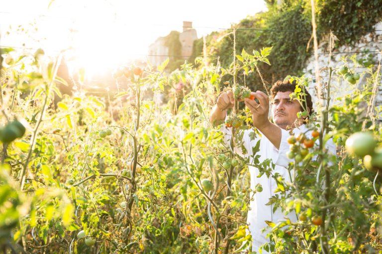 Le Guide Michelin et son étoile verte Vers une gastronomie plus durable