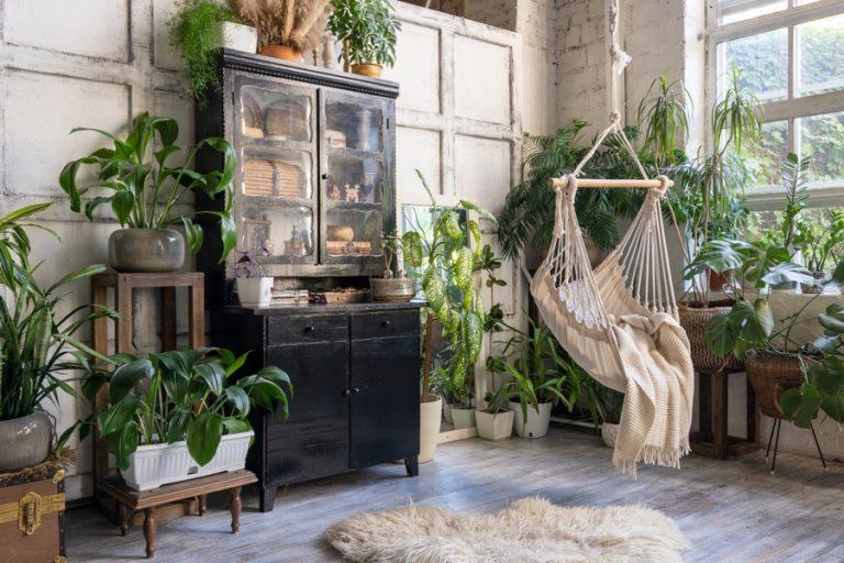 Des plantes pour un intérieur plus vivant